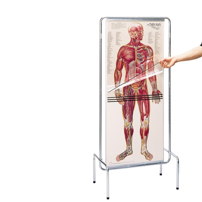 Wunderbar The Anatomy Of Man Ideen - Menschliche Anatomie Bilder ...